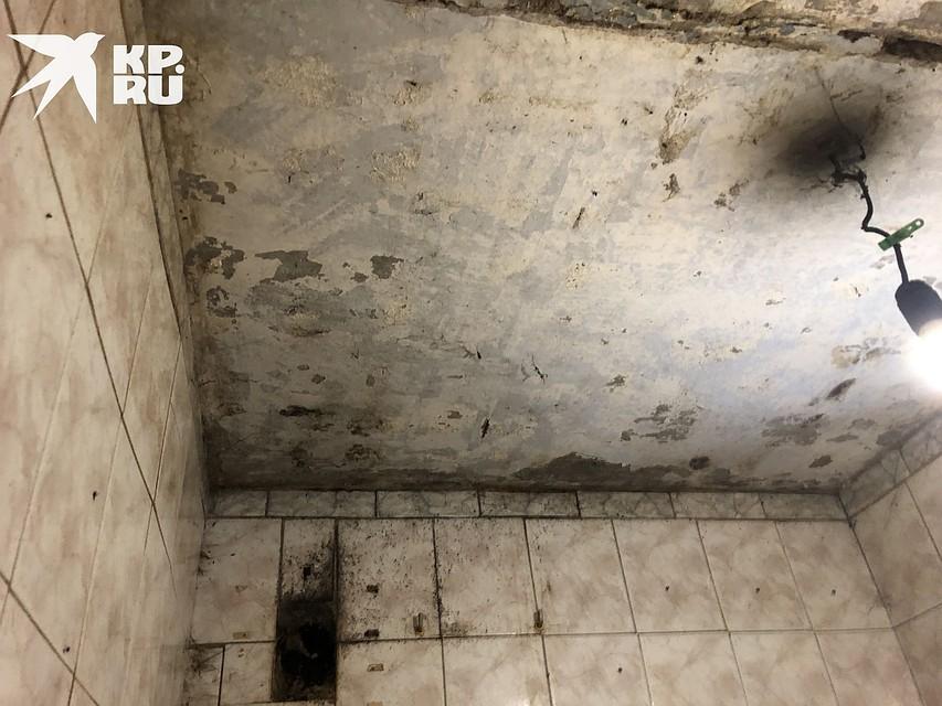 Ползают мухи по детям, а вместо обоев   гниль: в жутких условиях воспитывает 4 малышей сирота под Новосибирском