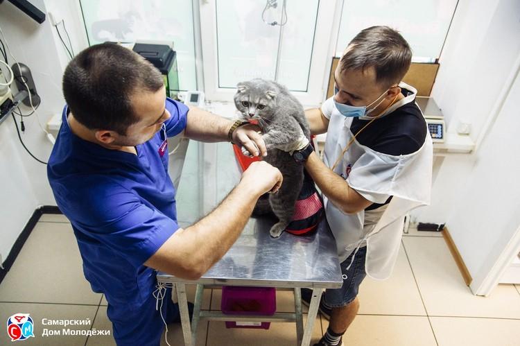 В ветеринарной клинике согласились помочь бесплатно. Фото: СДМ