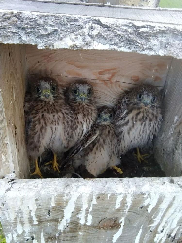 Дуплоны строятся с учетом конкретного вида птиц. Фото: Елена ШНАЙДЕР.