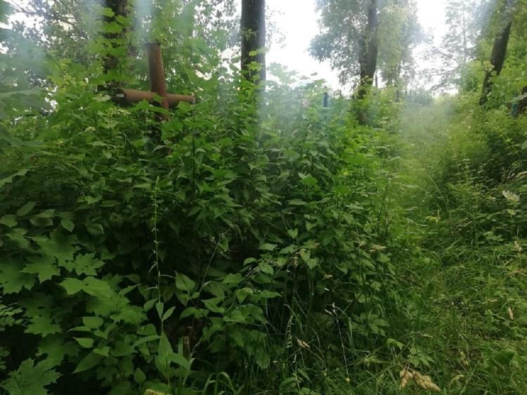 Некоторые могилы уже практически теряются в зарослях кустов
