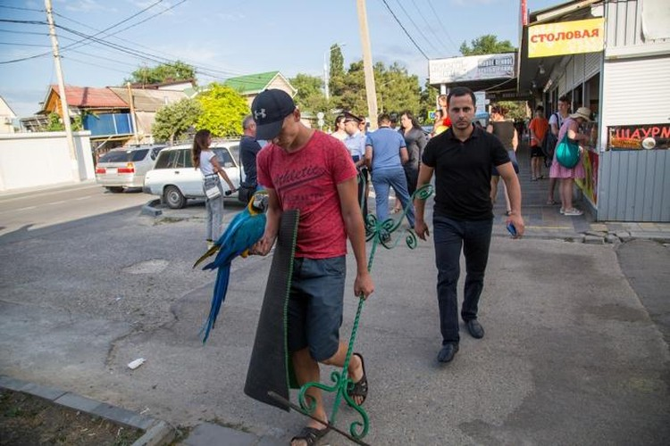 Фото: пресс-служба администрации Анапы