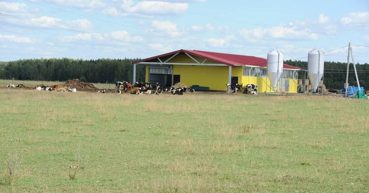 Процессом дойки на ферме полностью управляет компьютер Фото: АО «Россельхозбанк»