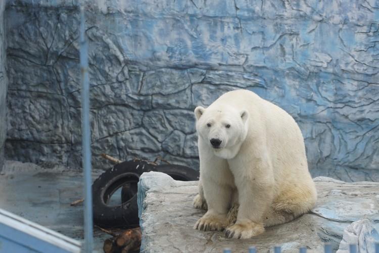 За время карантина в зоопарке появились малыши.