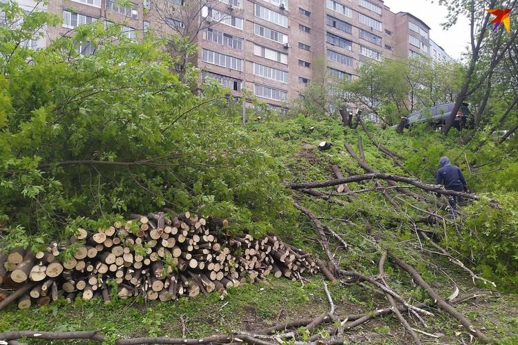 Рабочие спили деревья вблизи домов