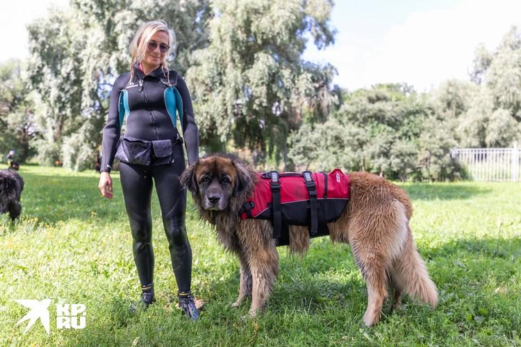 Собаки-водолазы достигают веса 60-70 кг.