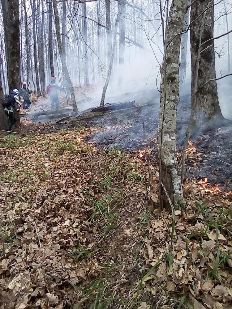 Пока профессионалы окапывали кромку горящей подстилки, неравнодушные туристы пытались спасать деревья