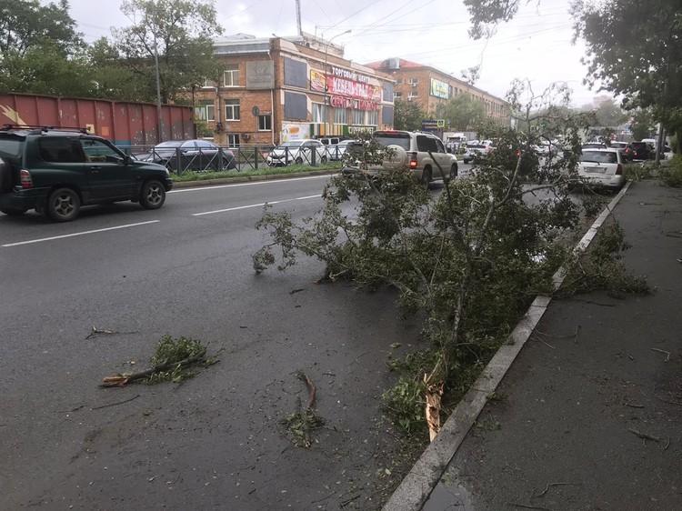 Обломки деревьев лежат прямо на проезжей части