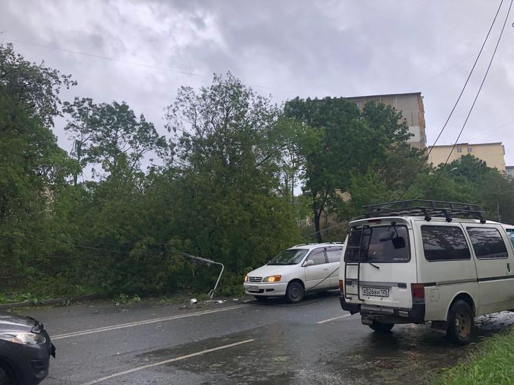 Вместе с деревьями ураганный ветер валит световые опоры. Фото: Дарья Наумец