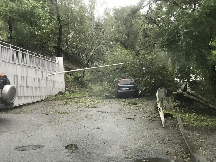 Дерево перекрыло улицу Володарского