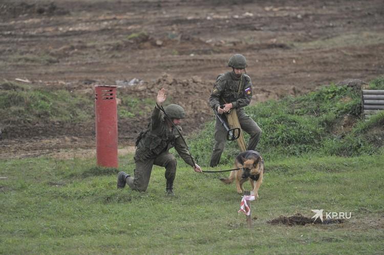 Военные кинологи на демонстрационном показе.