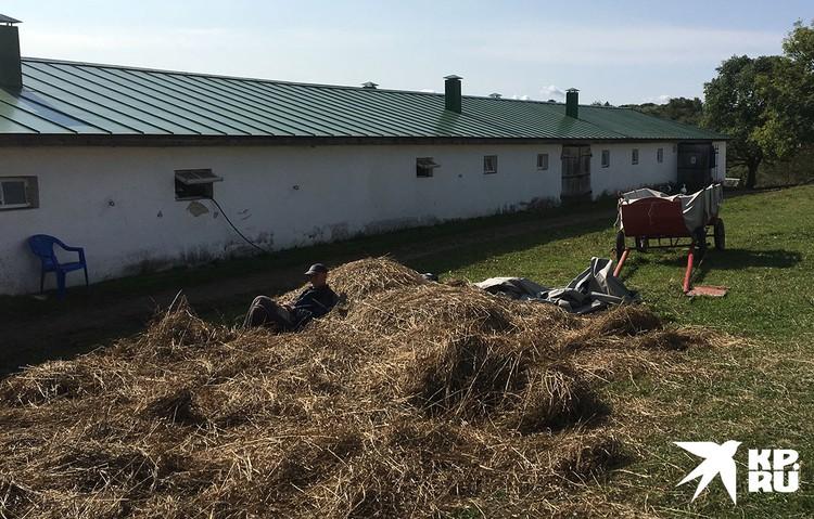 Возле мемориальной конюшни на стоге сена валялся работник в толстовке, заложив руки под голову.