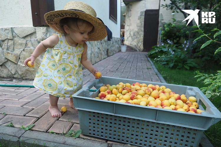 Ваш ребенок не любит овощи и мало ест фруктов? Приучайте его с младенчества, для начала в виде игры
