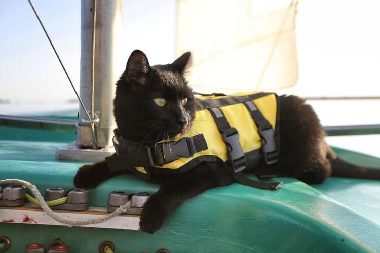 У кота есть свой спасательный жилет. Фото: личный архив героя