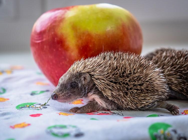 Грибы и яблоки - нет, не хочу. Фото: Роев ручей.