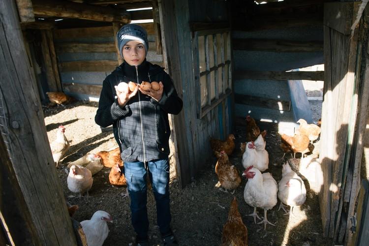 Куры - источник не только яиц, но и радости для детворы