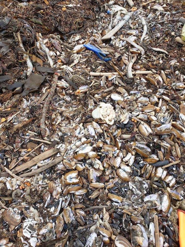 Мертвых животных, по всей видимости, выбросило на берег штормом. Фото: Александр Федотов и Виталий Шикора