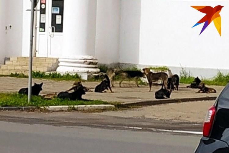 А тем временем, к примеру, вот такая стая бездомных собак была замечена в Пролетарском районе возле Комсомольской площади. Фото: Валентина Пузанова.