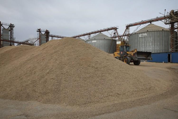 Более 30 центнеров с гектара собрали пшеницы, 22-24 – рапса. ФОТО: Лариса Федорова.