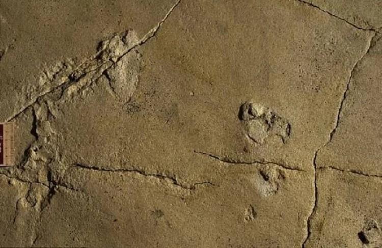 Загадочные следы возрастом более 5 миллионов лет на побережье острова Крит.