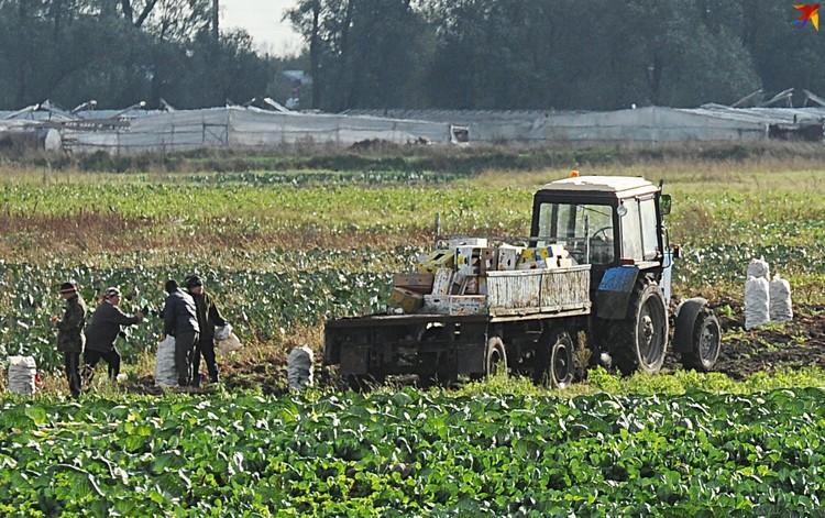 Ольшанцы до холодов спешат собрать урожай.