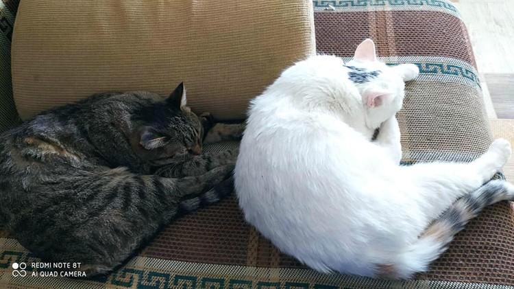 Домашняя скорая помощь: коты не отходят ни на минуту. Фото: Виктория Олиферчук