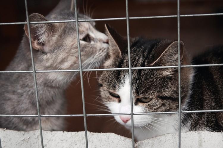 """Кошки в кожуховском приюте Фото: БФ """"Рэй"""""""