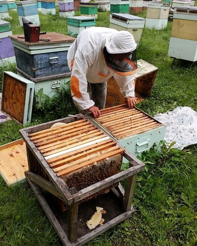 Приморским пчеловодам выставили огромный счет якобы за нетрудовые доходы