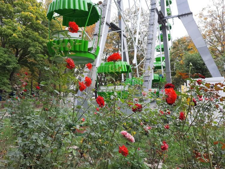 В парке еще цветут розы