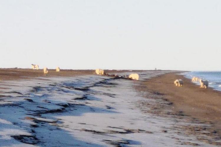За медведями ежедневно следят специалисты. Фото: Татьяна Миненко/WWF России.