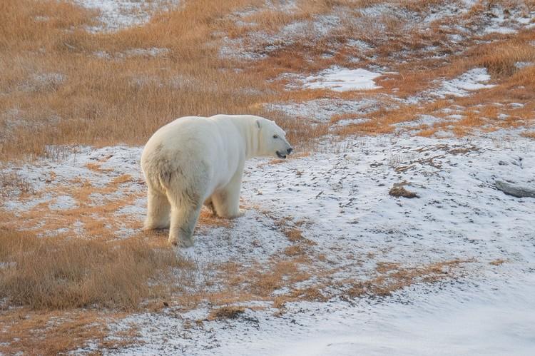 В 40 км от природного заповедника «Медвежьи острова». Фото: Максим Рязанцев