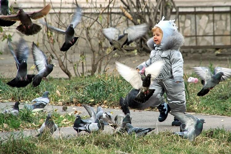 Голуби и дети. 2009 год