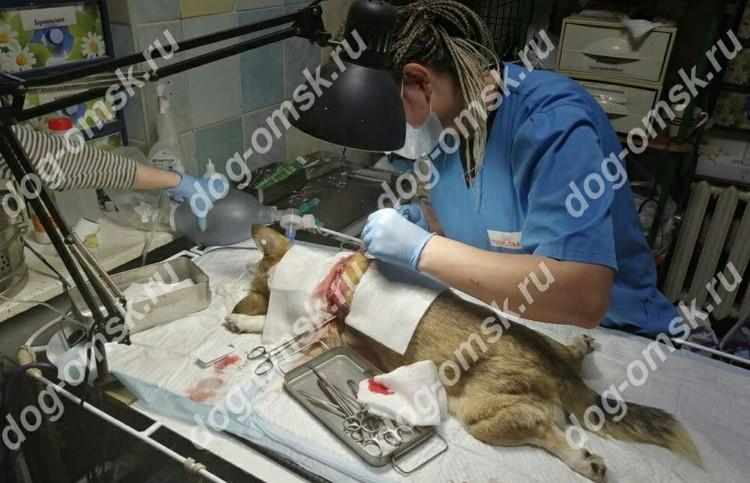 Капе уже сделали операцию, она идет на поправку. Фото: приют «Друг»