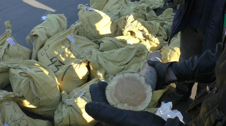 Якуты смогли достать более 4,5 тонны бивней мамонта