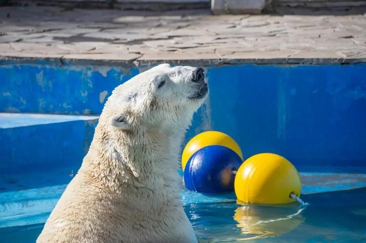 Фото: ростовский зоопарк