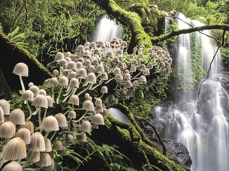 Кевин Де Ври (Австралия). «Зачарованный лес (Национальный парк Ламингтон)». Категория «Растения и грибы». Фото: Kevin De VREE
