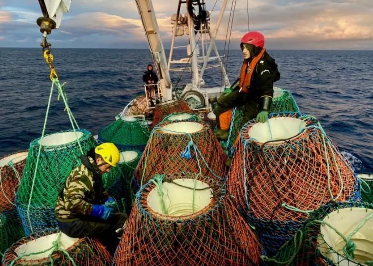 В начале сезона команда подготавливает ловушки и выбрасывает их в море. Фото: vc.ru