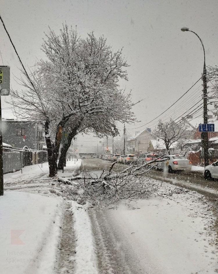 Под тяжестью снега рухнула ветка Фото: Типичный Краснодар