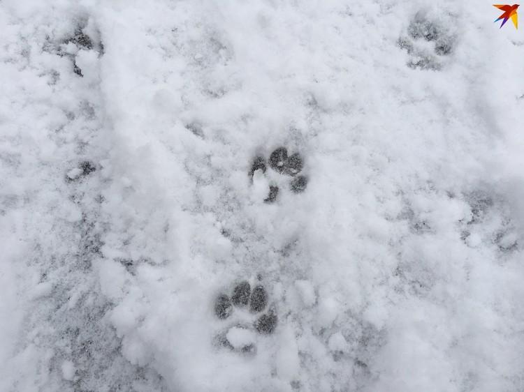 Краснодарские собаководы даже временно отказались от прогулок с питомцами.