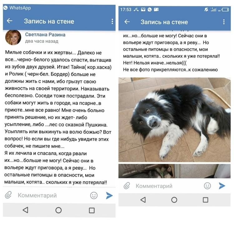 Светлана Разина группа Мираж веткупон новости о животных vetkupon.ru
