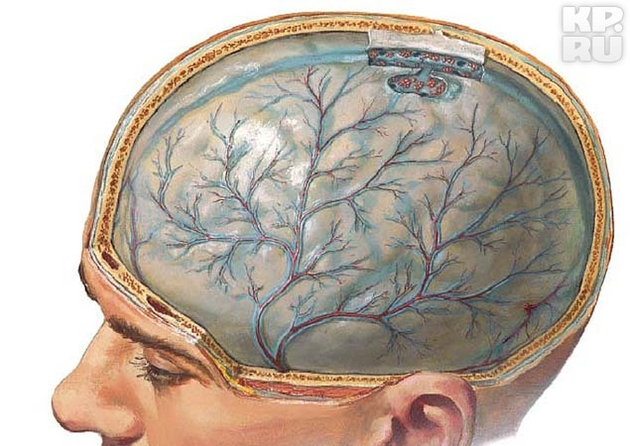 Adult encephalitis
