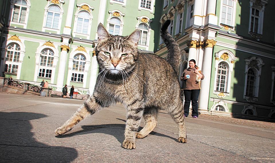 Ржачные картинки с кошками и надписью при регулярном