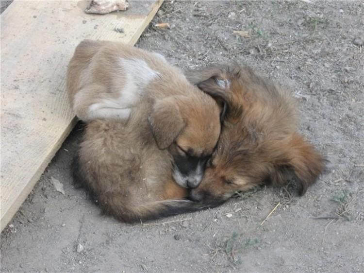 Животные часто ведут себя гуманнее по отношению друг к другу, чем люди