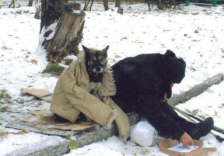 Бездомные люди и животные нередко живут бок о бок