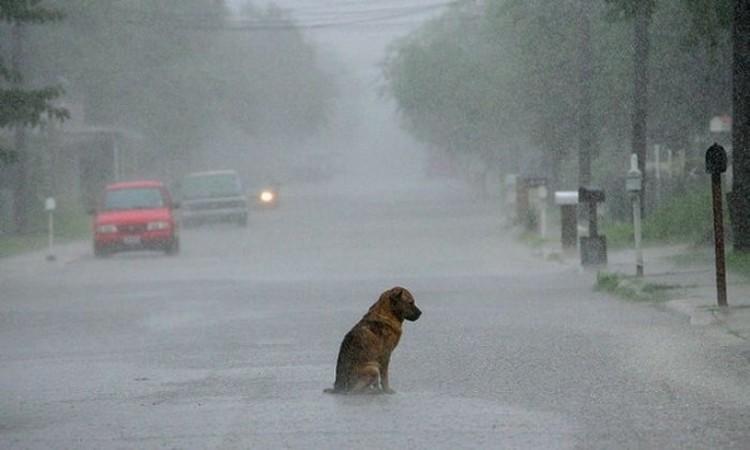 На улице у собаки мало шансов выжить