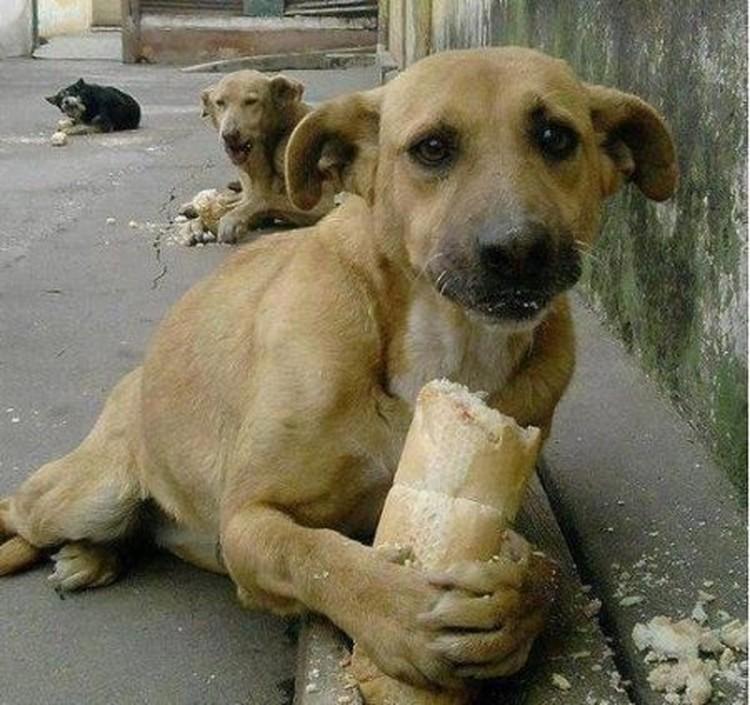 Только в Москве живет несколько десятков тысяч бездомных собак