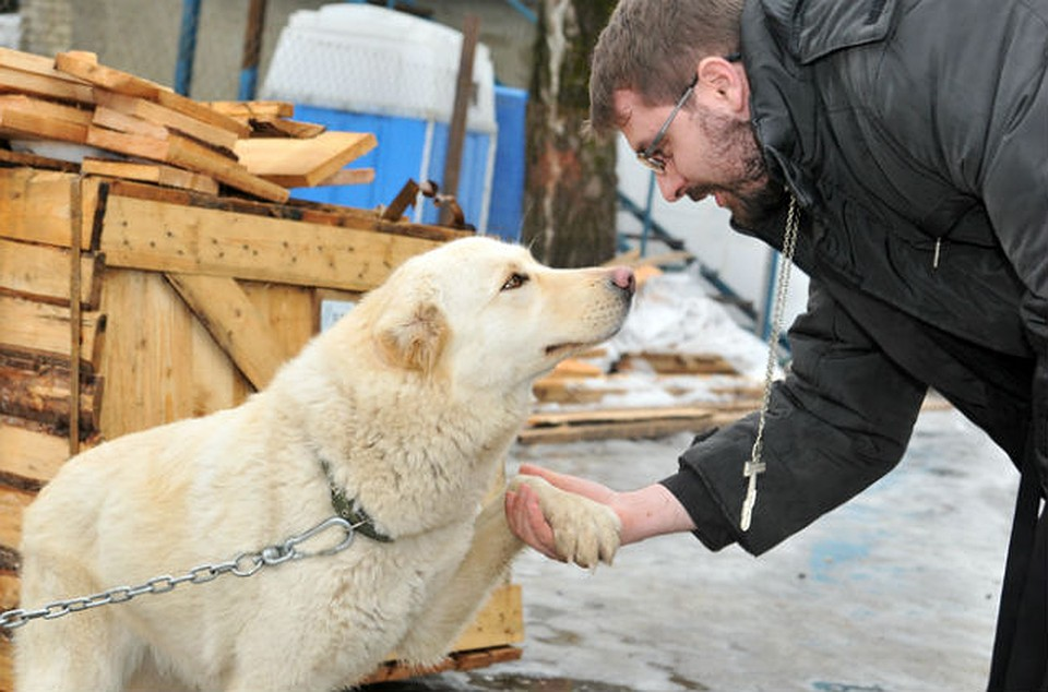 пришли ставропольский приют для животных фото симулирует работу сотового