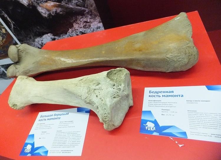 А еще можно в подробностях разглядеть отдельные части животных ледникового периода.