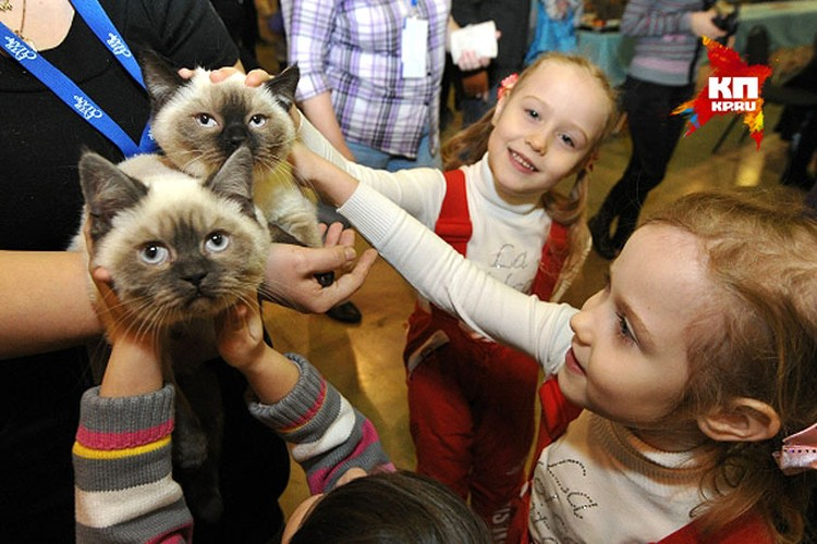 """Чем только не лечат кошки - урчанием, шёрсткой, поведением. Эти животные давно заслужили славу """"домашнего доктора""""."""