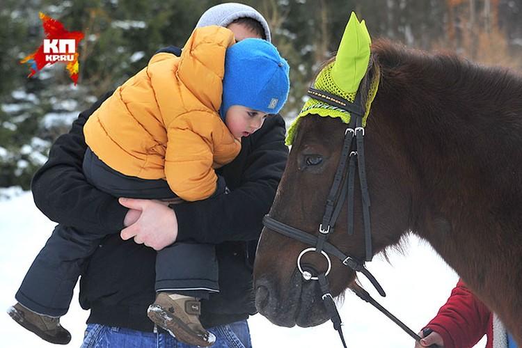 Лечение лошадками официально называется иппотерапией.