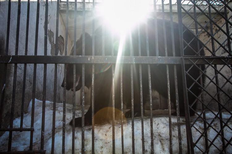 Солнышко прогревает медвежью шкурку